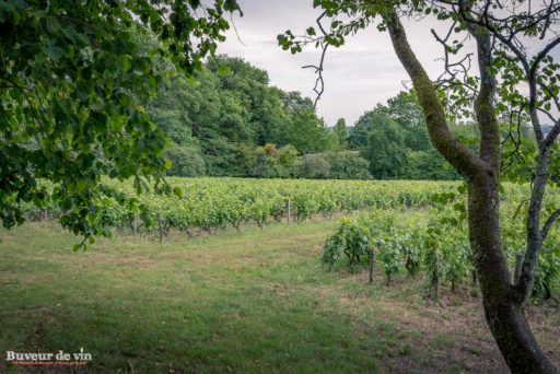 parcelle de vigne de chenin du Clos de la meslerie à vouvray, peter hahn