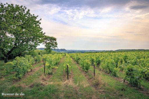 parcelle de vigne de chenin du Clos de la meslerie à vouvray, soleil couchant