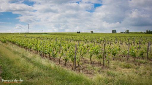Parcelle de vignes de cabernet franc, Les Pouches, domaine de la porte saint jean, sylvain dittiere, vigneron a montreuil-bellay, en appellation saumur champigny