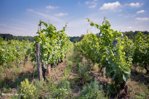 Le rocher des violettes de Xavier Weisskopf, parcelle Les Borderies, à la limite de l'appellation Montlouis et Touraine, il y a de la vie dans la parcelle