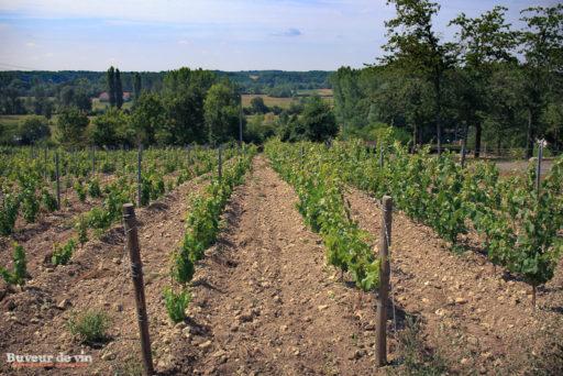 rocher des violettes de xavier weisskopf, vigneron en appellation montlouis, parcelle de jeunes plants sur hautes tiges