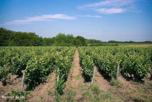 rocher des violettes de xavier weisskopf, vigneron en appellation montlouis, vignes entrant dans la cuvée la negrette