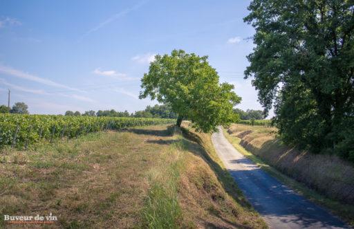 rocher des violettes de xavier weisskopf, parcelle donnant la methode traditionnelle, vigneron en appellation montlouis