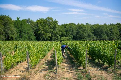 rocher des violettes de xavier weisskopf, vigneron en appellation montlouis, parcelle de pinot noir