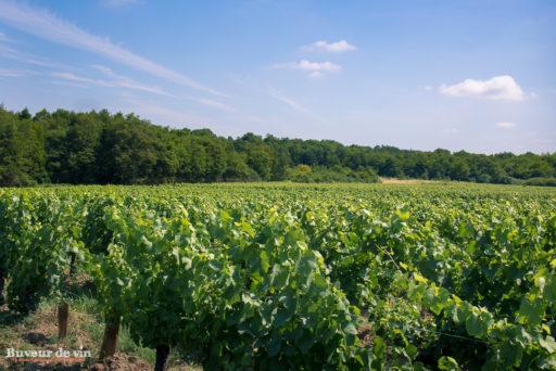 rocher des violettes de xavier weisskopf, vigneron en appellation montlouis, parcelle du grand poirier