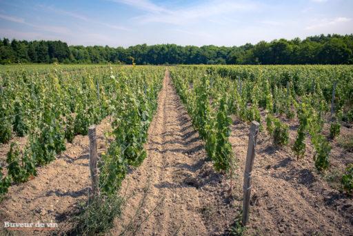 Le rocher des violettes de Xavier Weisskopf, parcelle Les Borderies, à la limite de l'appellation Montlouis et Touraine. Les sols sont désherbés mécaniquement (travaillés)