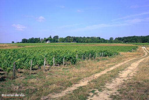 Le rocher des violettes de Xavier Weisskopf, parcelle Les Borderies, à la limite de l'appellation Montlouis et Touraine