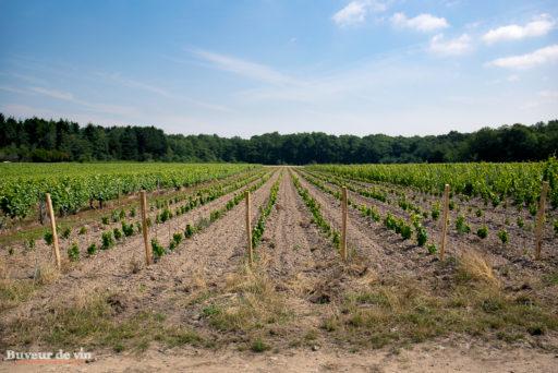 Le rocher des violettes de Xavier Weisskopf, Les jeunes vignes de chenin de la parcelle Les Borderies, à la limite de l'appellation Montlouis et Touraine