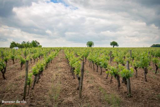 """Parcelle de vignes de la cuvée """"Les Cormiers"""" du domaine de la Porte Saint Jean, sylvain dittiere, vigneron a saumur"""