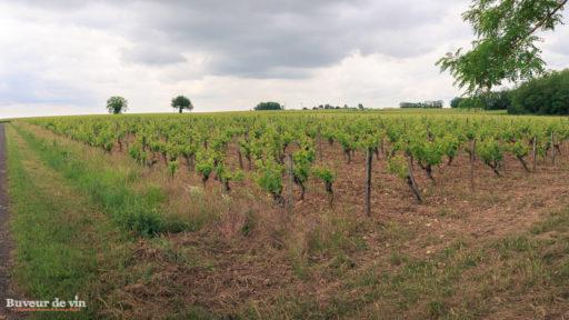 """Parcelle de vignes de la cuvée """"Les Cormiers"""" du domaine de la Porte Saint Jean, sylvain dittiere, vigneron a montreuil-bellay, en appellation saumur"""