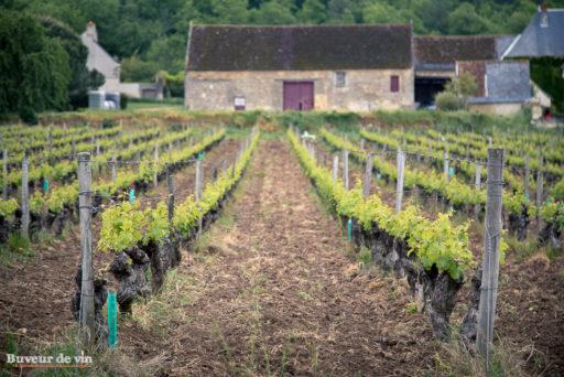 vue de la parcelle donnant la cuvée gabare, nicolas grosbois, vigneron en appellation chinon
