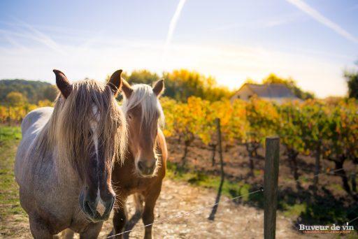 benoit courault cheval trait breton norway et son noveau copain